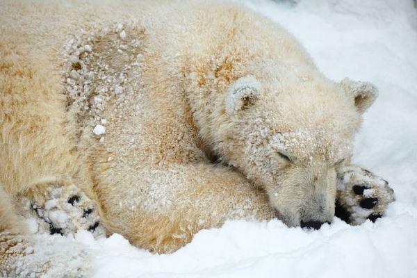 冬眠 する 動物